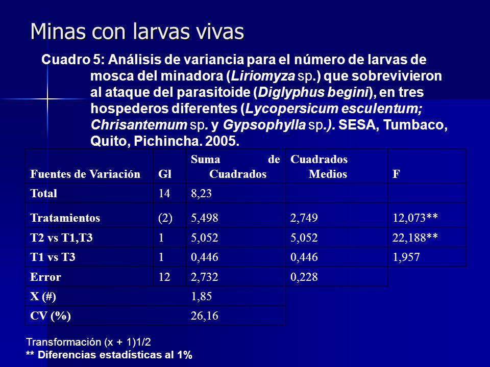 Minas con larvas vivas Fuentes de VariaciónGl Suma de Cuadrados Cuadrados MediosF Total148,23 Tratamientos(2)5,4982,74912,073** T2 vs T1,T315,052 22,188** T1 vs T310,446 1,957 Error122,7320,228 X (#) 1,85 CV (%) 26,16 Cuadro 5: Análisis de variancia para el número de larvas de mosca del minadora (Liriomyza sp.) que sobrevivieron al ataque del parasitoide (Diglyphus begini), en tres hospederos diferentes (Lycopersicum esculentum; Chrisantemum sp.