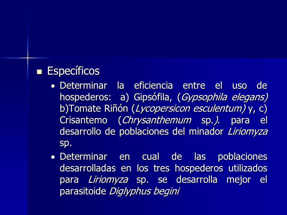 Específicos Específicos Determinar la eficiencia entre el uso de hospederos: a) Gipsófila, (Gypsophila elegans) b)Tomate Riñón (Lycopersicon esculentum) y, c) Crisantemo (Chrysanthemum sp.).