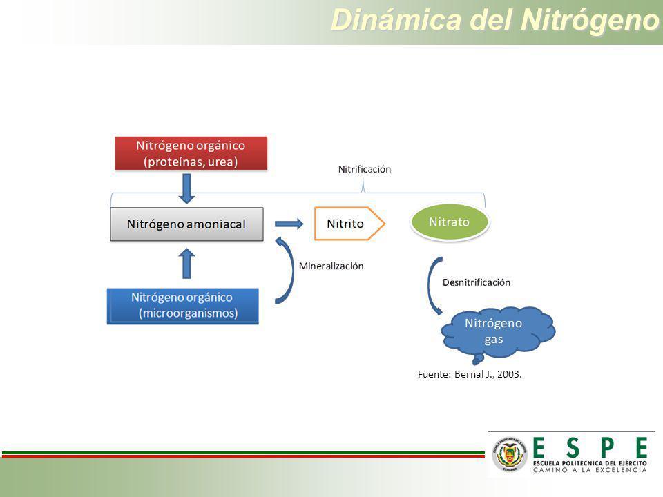 Dinámica del Nitrógeno Fuente: Bernal J., 2003.