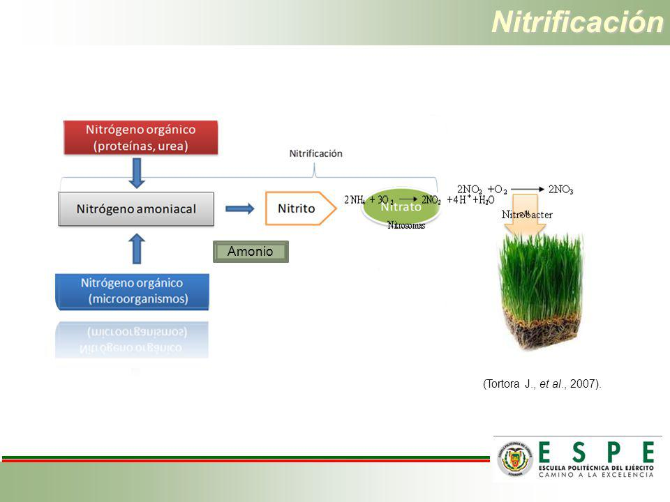 Nitrificación pH (Tortora J., et al., 2007).