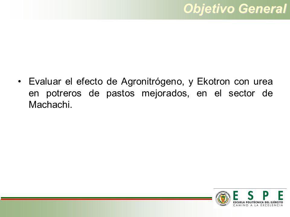 Objetivos específicos Evaluar el efecto de diferentes fuentes de nitrógeno sobre la producción de forraje.