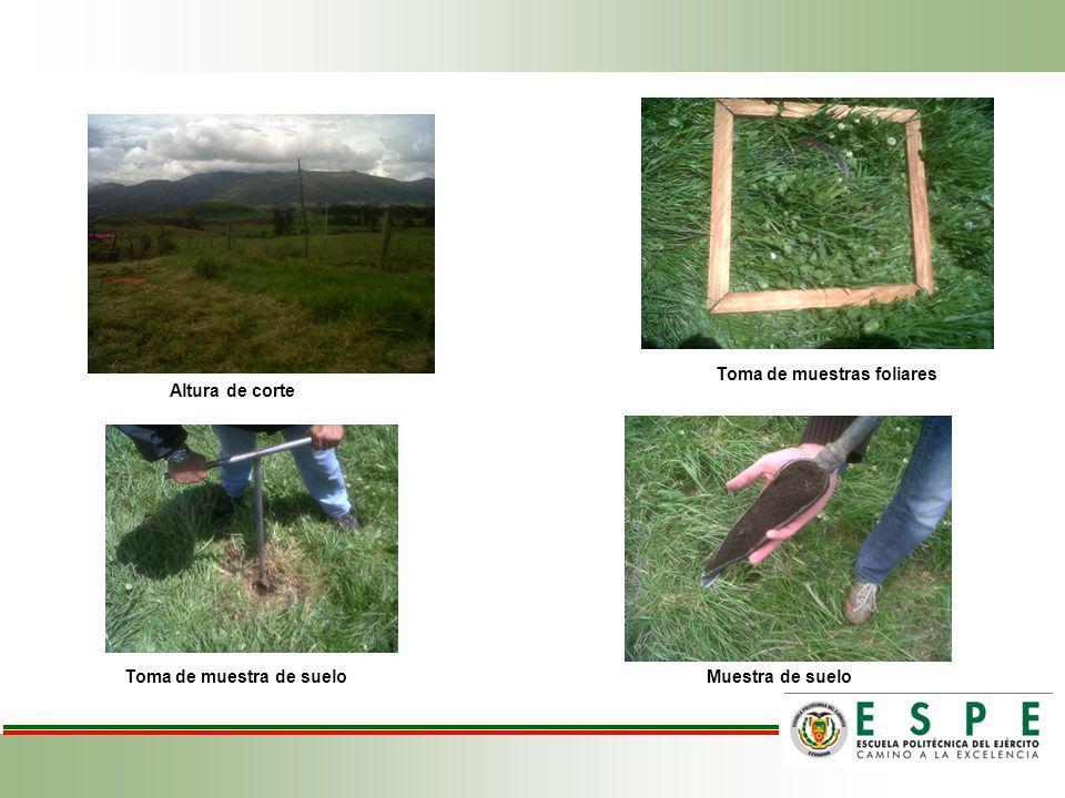 Altura de corte Toma de muestras foliares Muestra de suelo Toma de muestra de suelo