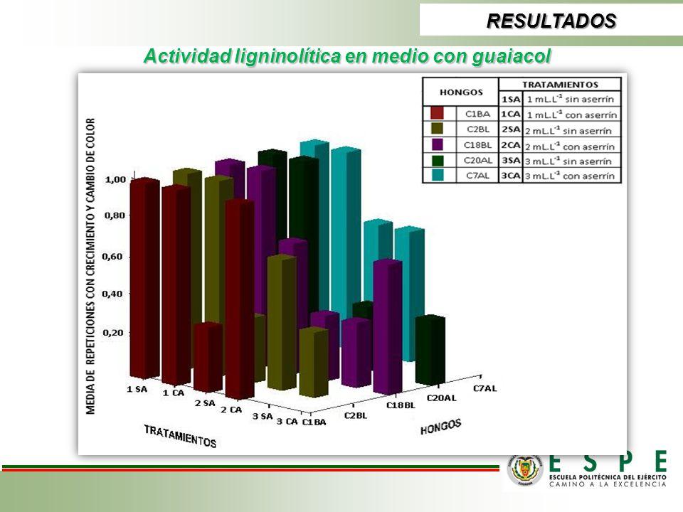 Actividad ligninolítica en medio con guaiacol RESULTADOS