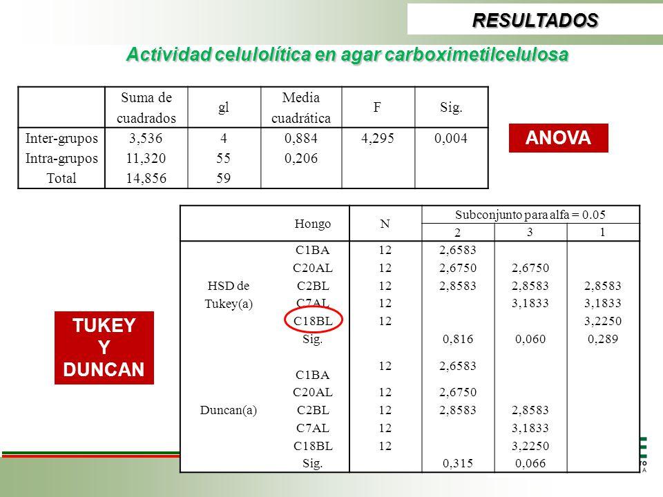 Actividad celulolítica en agar carboximetilcelulosa RESULTADOS ANOVA TUKEY Y DUNCAN Suma de cuadrados gl Media cuadrática FSig. Inter-grupos3,53640,88