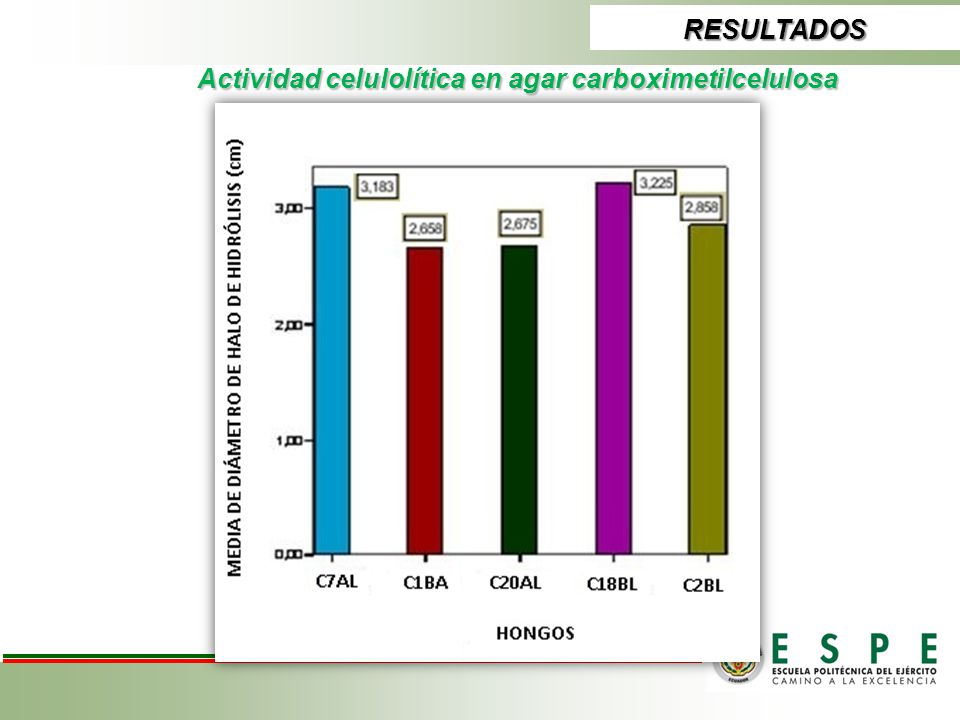 Actividad celulolítica en agar carboximetilcelulosa RESULTADOS