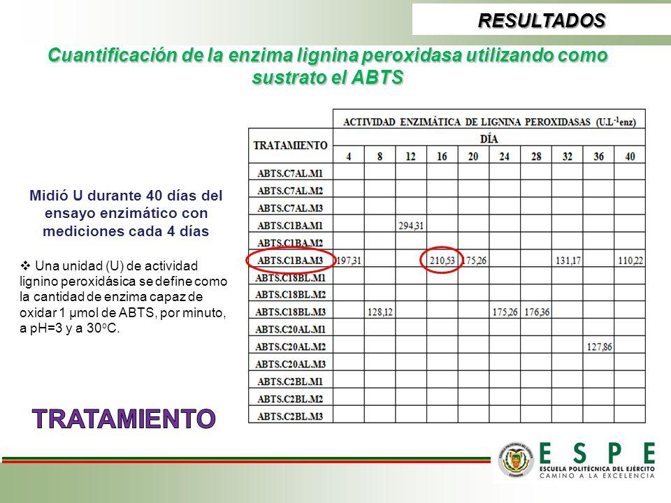 RESULTADOS Cuantificación de la enzima lignina peroxidasa utilizando como sustrato el ABTS Midió U durante 40 días del ensayo enzimático con medicione