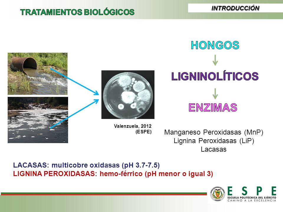 INTRODUCCIÓN Valenzuela, 2012 (ESPE) Manganeso Peroxidasas (MnP) Lignina Peroxidasas (LiP) Lacasas LACASAS: multicobre oxidasas (pH 3.7-7.5) LIGNINA P