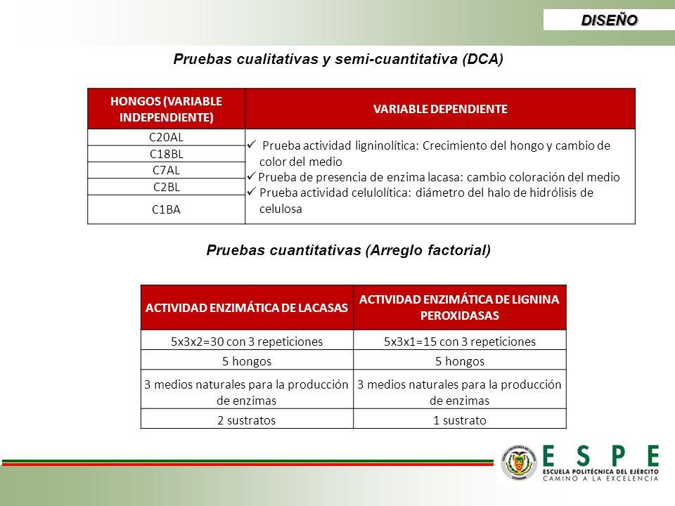 DISEÑO Pruebas cualitativas y semi-cuantitativa (DCA) HONGOS (VARIABLE INDEPENDIENTE) VARIABLE DEPENDIENTE C20AL Prueba actividad ligninolítica: Creci