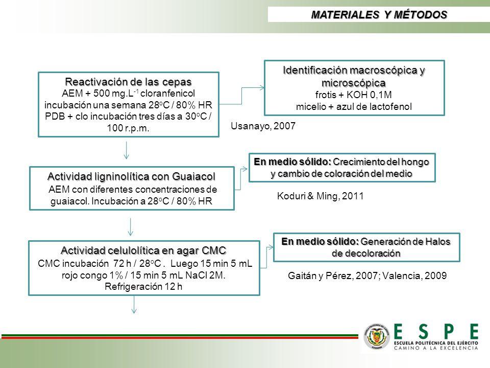 Reactivación de las cepas AEM + 500 mg.L -1 cloranfenicol incubación una semana 28 o C / 80% HR PDB + clo incubación tres días a 30 o C / 100 r.p.m. A