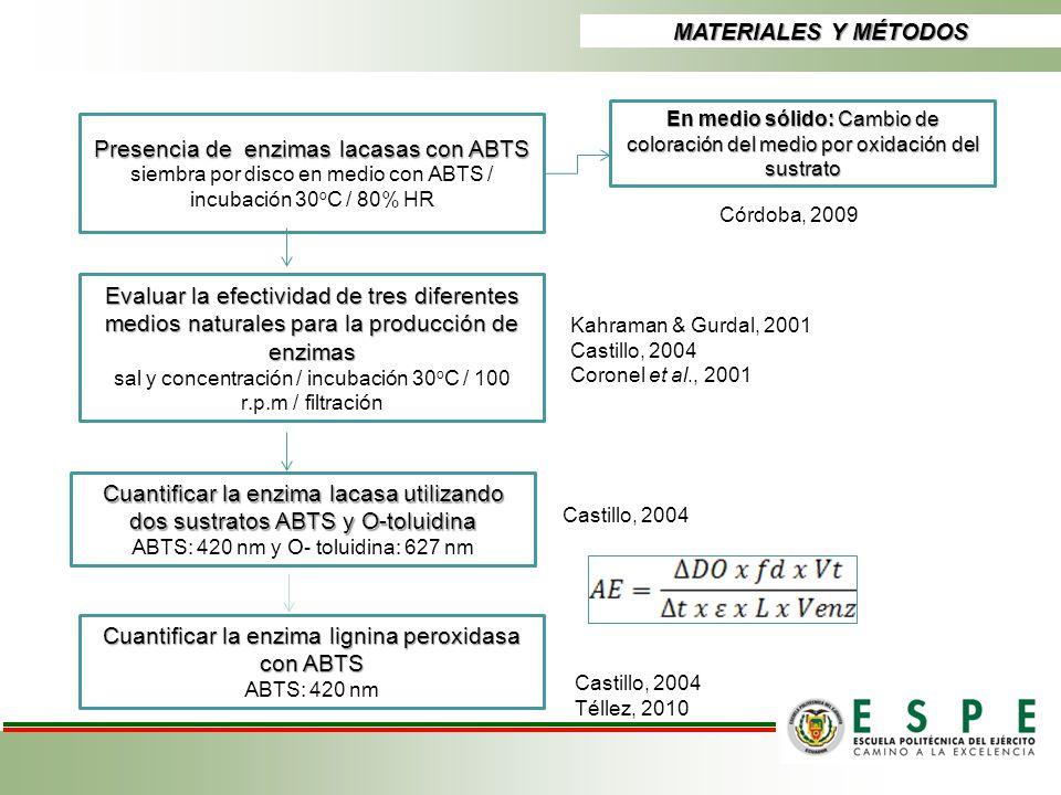 MATERIALES Y MÉTODOS Presencia de enzimas lacasas con ABTS siembra por disco en medio con ABTS / incubación 30 o C / 80% HR En medio sólido: Cambio de
