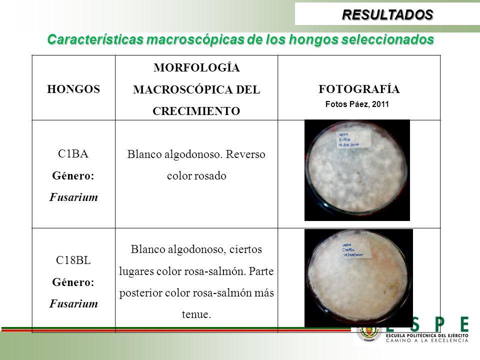 RESULTADOS Características macroscópicas de los hongos seleccionados HONGOS MORFOLOGÍA MACROSCÓPICA DEL CRECIMIENTO FOTOGRAFÍA C1BA Género: Fusarium B