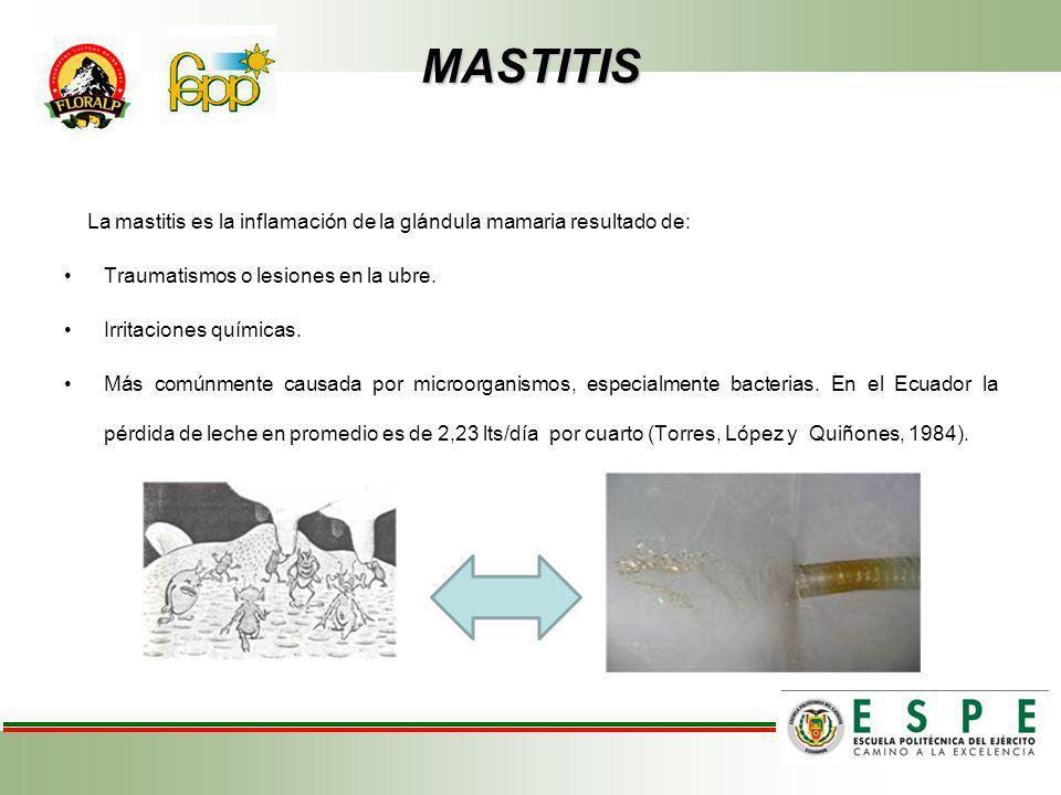 MASTITIS La mastitis es la inflamación de la glándula mamaria resultado de: Traumatismos o lesiones en la ubre.