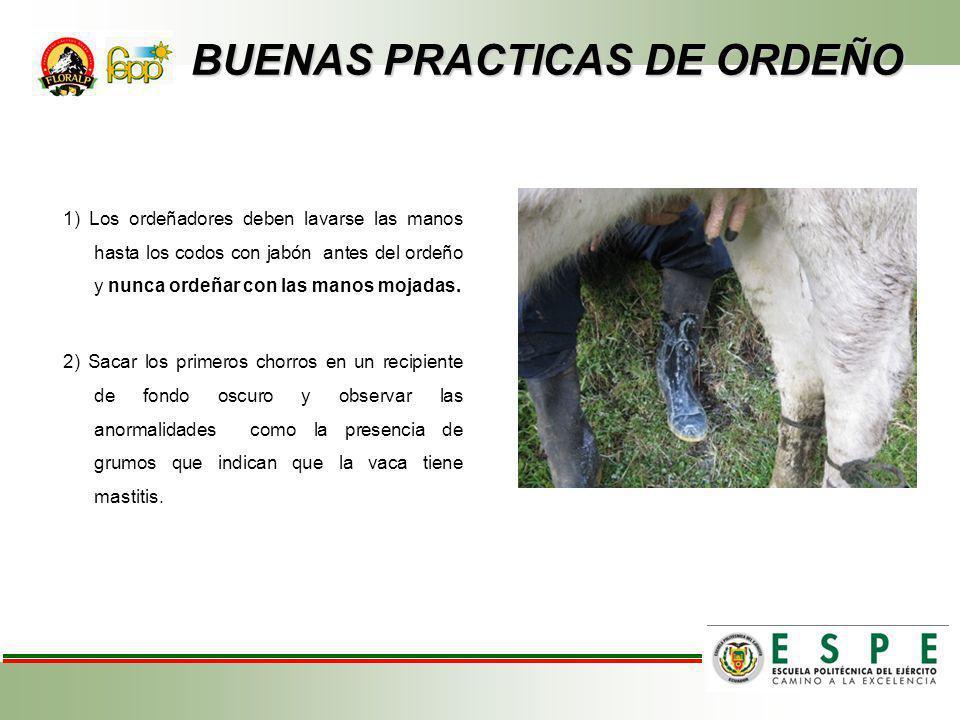 BUENAS PRACTICAS DE ORDEÑO BUENAS PRACTICAS DE ORDEÑO 3) Limpiar las ubres con un trapo limpio, con agua limpia y preferiblemente tibia.