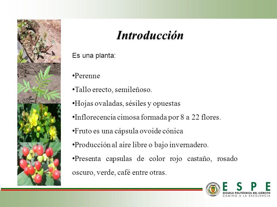 Tratamientos FACTORES SUSTRATOSESQUEJESENRAIZADORESTRATAMIENTOSCODIGO 100% Estopa de coco Rojo castañoPurín de manzanillaT1V 1 S 1 E 1 Purín de caféT2V 1 S 1 E 2 BioplusT3V 1 S 1 E 3 Rosado oscuroPurín de manzanillaT10V 1 S 2 E 1 Purín de caféT11V 1 S 2 E 2 BioplusT12V 1 S 2 E 3 CaféPurín de manzanillaT19V 1 S 3 E 1 Purín de caféT20V 1 S 3 E 2 BioplusT21V 1 S 3 E 3 50% Estopa de coco+50% cascarilla de arroz Rojo castañoPurín de manzanillaT4V 2 S 1 E 1 Purín de caféT5V 2 S 1 E 2 BioplusT6V 2 S 1 E 3 Rosado oscuroPurín de manzanillaT13V 2 S 2 E 1 Purín de caféT14V 2 S 2 E 2 BioplusT15V 2 S 2 E 3 CaféPurín de manzanillaT22V 2 S 3 E 1 Purín de caféT23V 2 S 3 E 2 BioplusT24V 2 S 3 E 3 50% Estopa de coco+50% Tierra negra Rojo castañoPurín de manzanillaT7V 3 S 1 E 1 Purín de caféT8V 3 S 1 E 2 BioplusT9A 3 B 1 C 3 Rosado oscuroPurín de manzanillaT16V 3 S 2 E 1 Purín de caféT17V 3 S 2 E 2 BioplusT18V 3 S 2 E 3 CaféPurín de manzanillaT25V 3 S 3 E 1 Purín de caféT26V 3S B 3 E 2 BioplusT27V 3 S 3 E 3