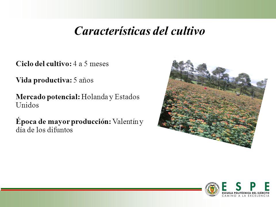 OBJETIVO GENERAL Evaluar las estrategias de propagación vegetativa de esquejes de Hypericum sp para un enraizamiento óptimo empleando tres sustratos, tres enraizadores orgánicos en dos sistemas de cultivo.