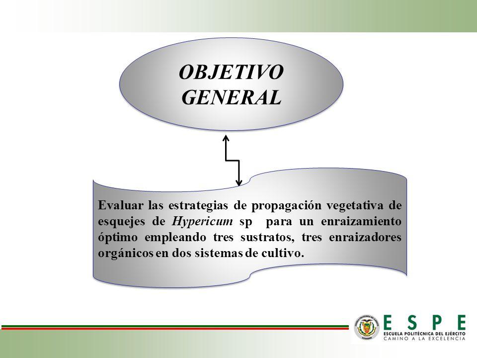 Resultados y Discusiones Supervivencia de las plántulas de Hypericum sp.
