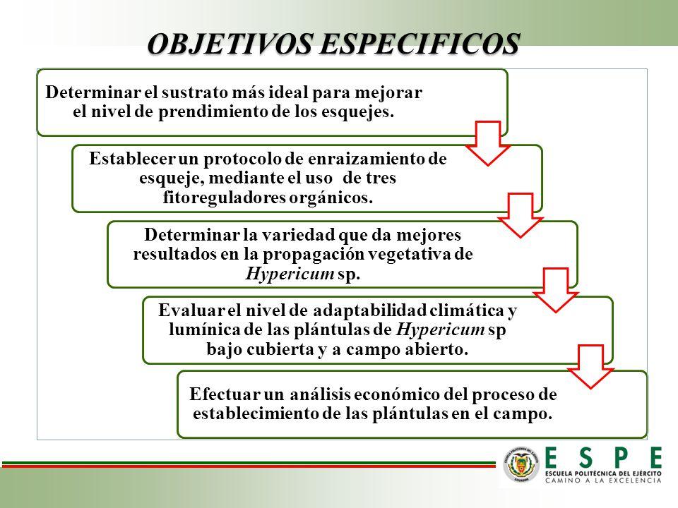 Metodología Materiales Ubicación: Primera fase: Proceso de enraizamiento Finca Goleen Leaf (ESPOCH) Segunda fase: Proceso de adaptación y aclimatación Ha.