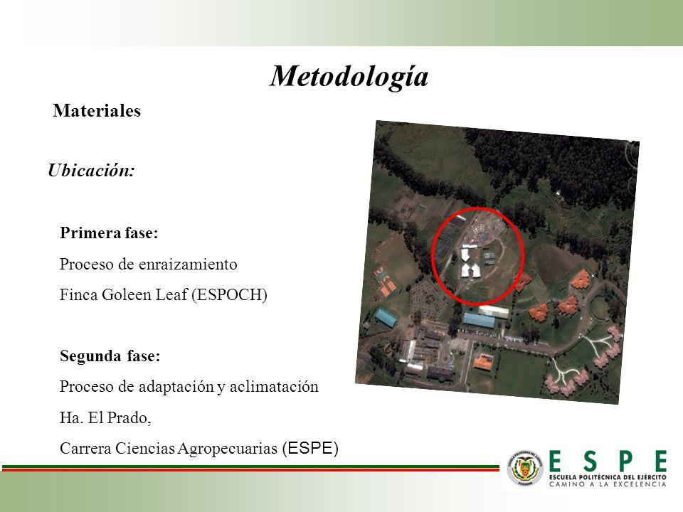 Métodos de Evaluación y Datos Tomados Primera fase Porcentaje de enraizamiento basándose en la diferencia entre el material vegetal total y el enraizamiento con los tres fitoreguladores orgánicos (%).