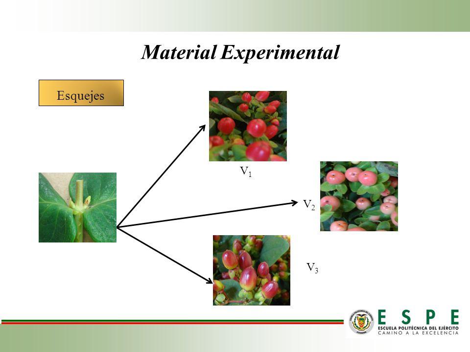 Sustratos Enraizadores orgánicos Material Experimental S1S1 S2S2 S3S3 E3E3 E2E2 E1E1