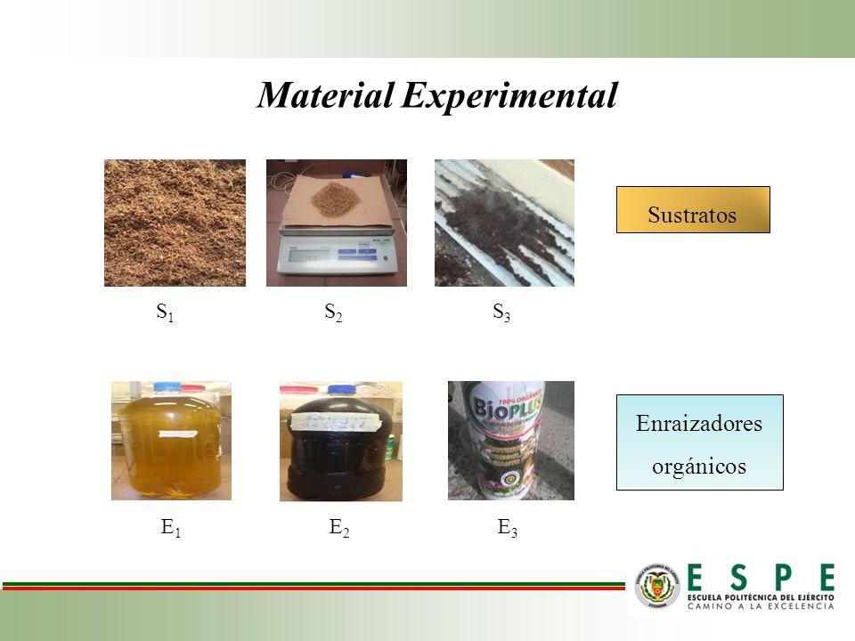Tratamientos 100% Estopa de coco V1V1 E1E1 E2E2 E3E3