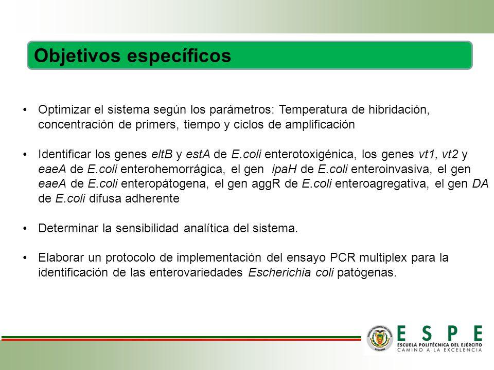 Optimizar el sistema según los parámetros: Temperatura de hibridación, concentración de primers, tiempo y ciclos de amplificación Identificar los genes eltB y estA de E.coli enterotoxigénica, los genes vt1, vt2 y eaeA de E.coli enterohemorrágica, el gen ipaH de E.coli enteroinvasiva, el gen eaeA de E.coli enteropátogena, el gen aggR de E.coli enteroagregativa, el gen DA de E.coli difusa adherente Determinar la sensibilidad analítica del sistema.