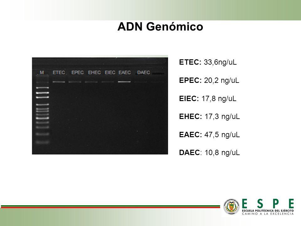 ADN Genómico ETEC: 33,6ng/uL EPEC: 20,2 ng/uL EIEC: 17,8 ng/uL EHEC: 17,3 ng/uL EAEC: 47,5 ng/uL DAEC: 10,8 ng/uL
