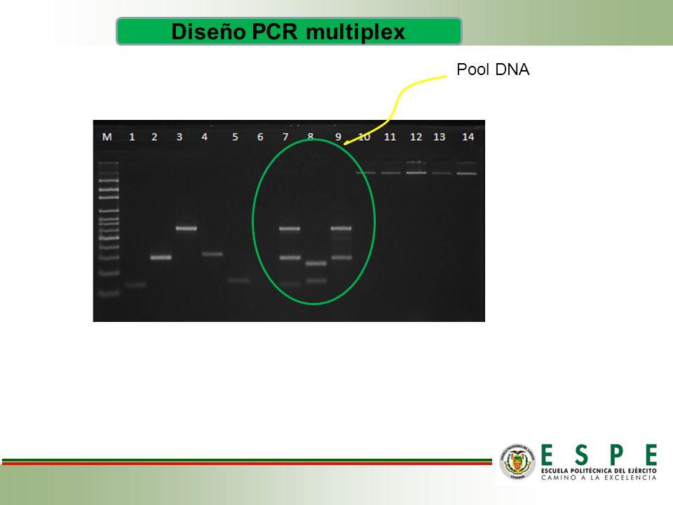 Diseño PCR multiplex Pool DNA