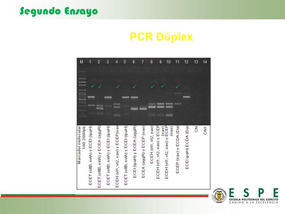 Segundo Ensayo PCR Dúplex