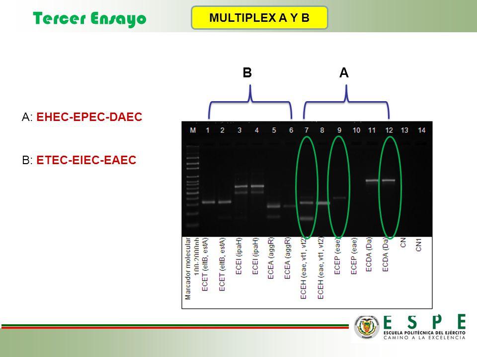 MULTIPLEX A Y B A: EHEC-EPEC-DAEC B: ETEC-EIEC-EAEC B A Tercer Ensayo