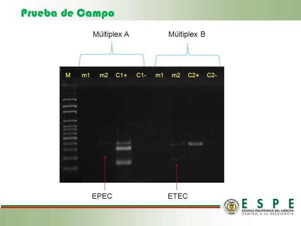 Prueba de Campo M m1 m2 C1+ C1- m1 m2 C2+ C2- Múltiplex A Múltiplex B EPECETEC