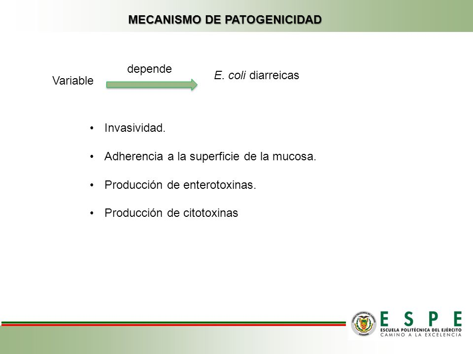 MECANISMO DE PATOGENICIDAD Variable depende E. coli diarreicas Invasividad. Adherencia a la superficie de la mucosa. Producción de enterotoxinas. Prod