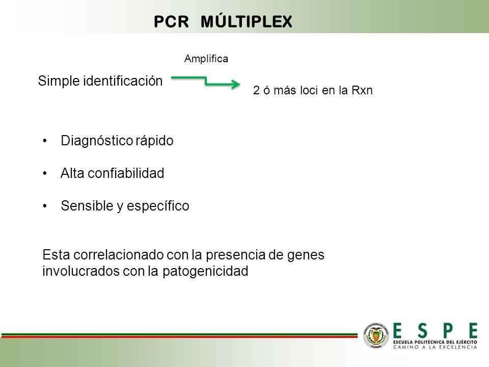 PCR MÚLTIPLEX Simple identificación 2 ó más loci en la Rxn Amplifica Diagnóstico rápido Alta confiabilidad Sensible y específico Esta correlacionado con la presencia de genes involucrados con la patogenicidad
