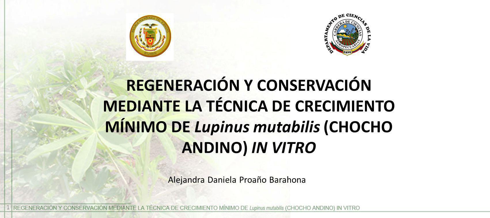 REGENERACIÓN Y CONSERVACIÓN MEDIANTE LA TÉCNICA DE CRECIMIENTO MÍNIMO DE Lupinus mutabilis (CHOCHO ANDINO) IN VITRO Alejandra Daniela Proaño Barahona