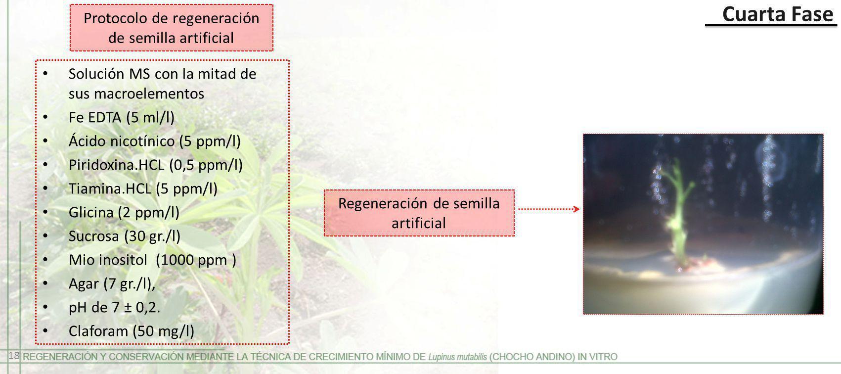 Cuarta Fase Regeneración de semilla artificial Protocolo de regeneración de semilla artificial Solución MS con la mitad de sus macroelementos Fe EDTA