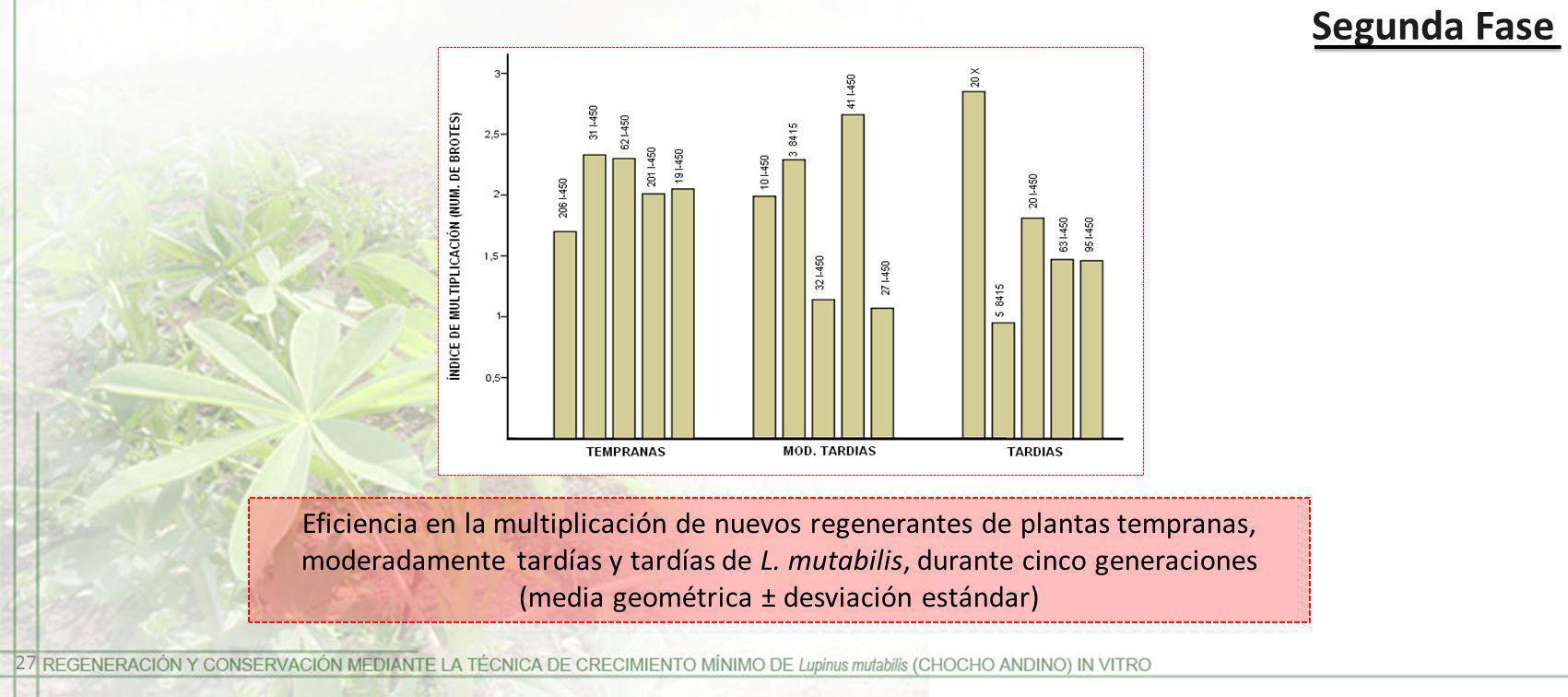 Segunda Fase 27 Eficiencia en la multiplicación de nuevos regenerantes de plantas tempranas, moderadamente tardías y tardías de L. mutabilis, durante