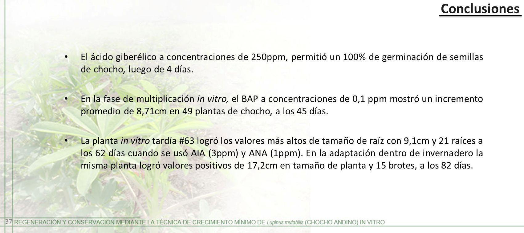 Conclusiones El ácido giberélico a concentraciones de 250ppm, permitió un 100% de germinación de semillas de chocho, luego de 4 días. En la fase de mu