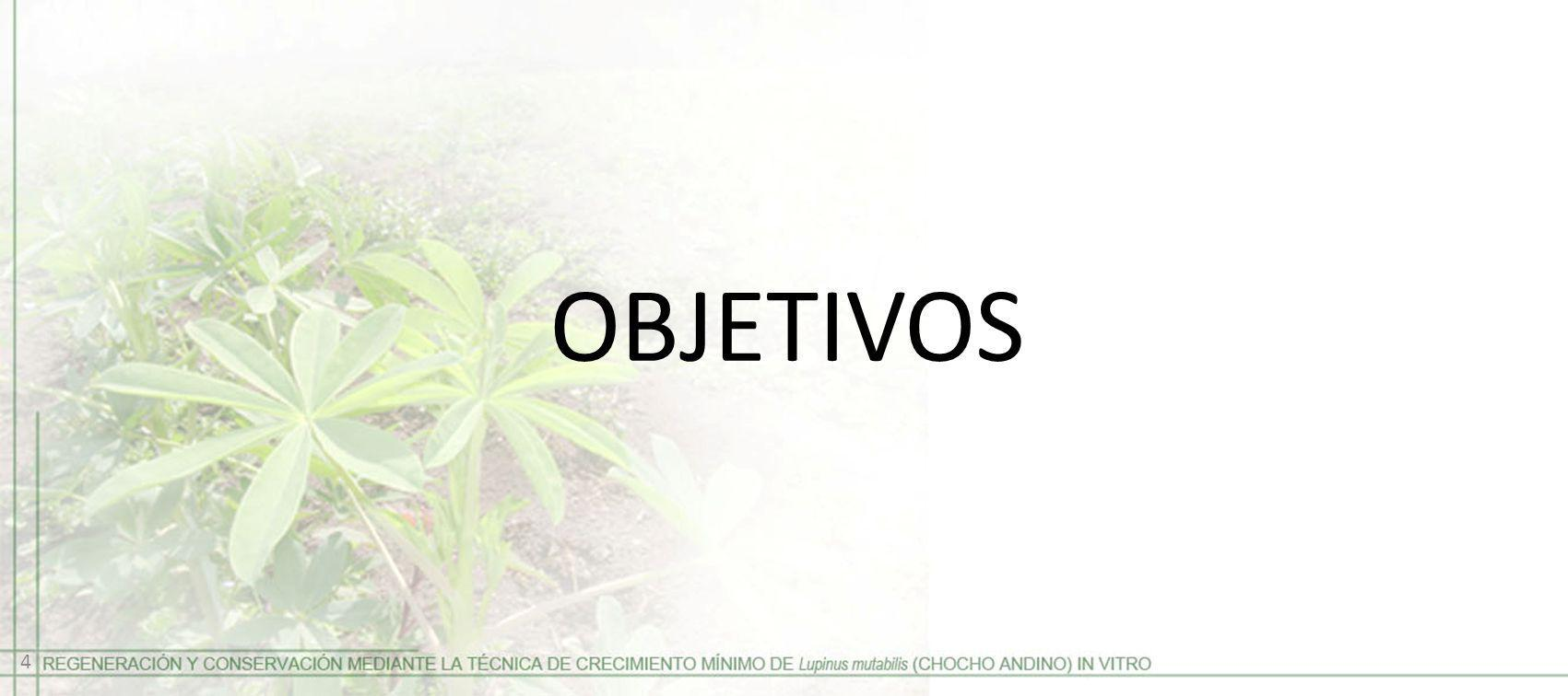 OBJETIVOS 4