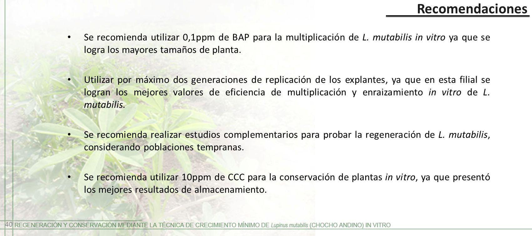 Se recomienda utilizar 0,1ppm de BAP para la multiplicación de L. mutabilis in vitro ya que se logra los mayores tamaños de planta. Utilizar por máxim