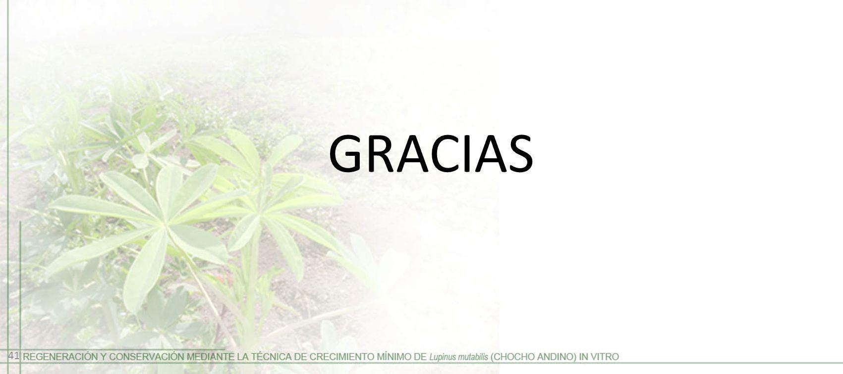 GRACIAS 41