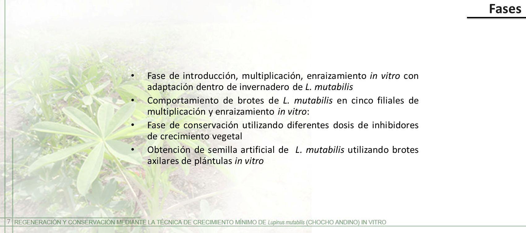 Fase de introducción, multiplicación, enraizamiento in vitro con adaptación dentro de invernadero de L. mutabilis Comportamiento de brotes de L. mutab