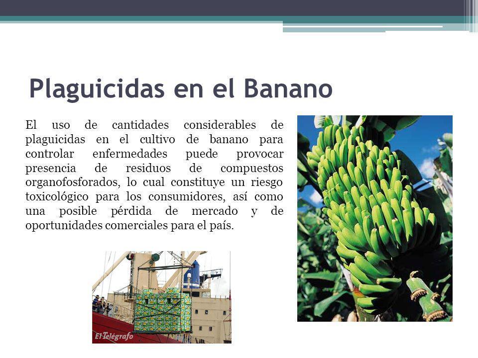 Plaguicidas en el Banano El uso de cantidades considerables de plaguicidas en el cultivo de banano para controlar enfermedades puede provocar presenci