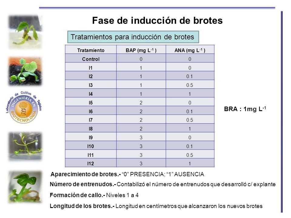 Fase de inducción de brotes TratamientoBAP (mg L -1 )ANA (mg L -1 ) Control00 I110 I210.1 I310.5 I411 I520 I620.1 I720.5 I821 I930 I1030.1 I1130.5 I12