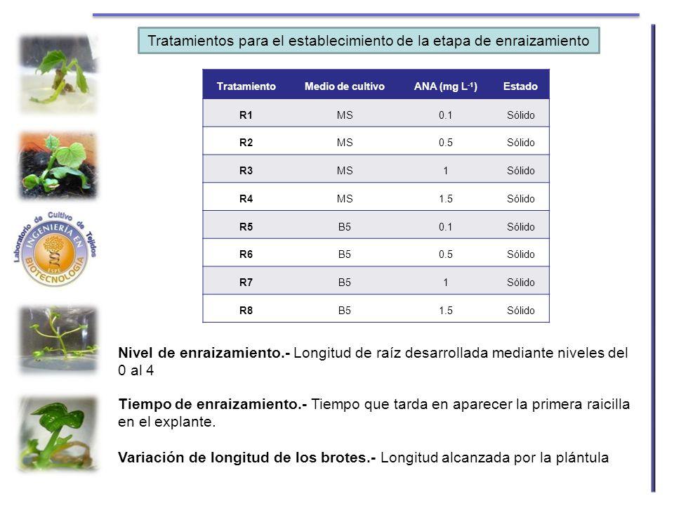 TratamientoMedio de cultivoANA (mg L -1 )Estado R1MS0.1Sólido R2MS0.5Sólido R3MS1Sólido R4MS1.5Sólido R5B50.1Sólido R6B50.5Sólido R7B51Sólido R8B51.5S