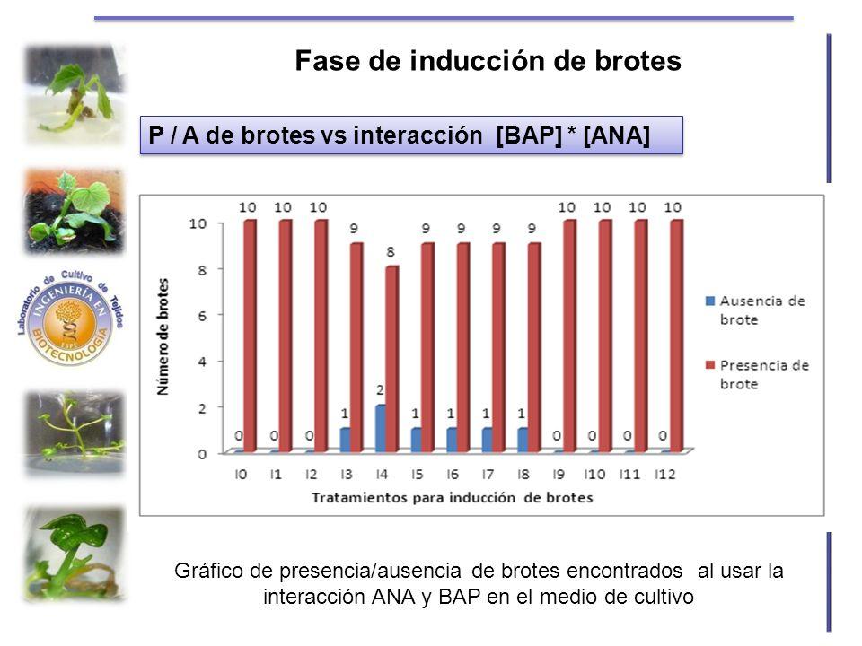 Gráfico de presencia/ausencia de brotes encontrados al usar la interacción ANA y BAP en el medio de cultivo P / A de brotes vs interacción [BAP] * [AN