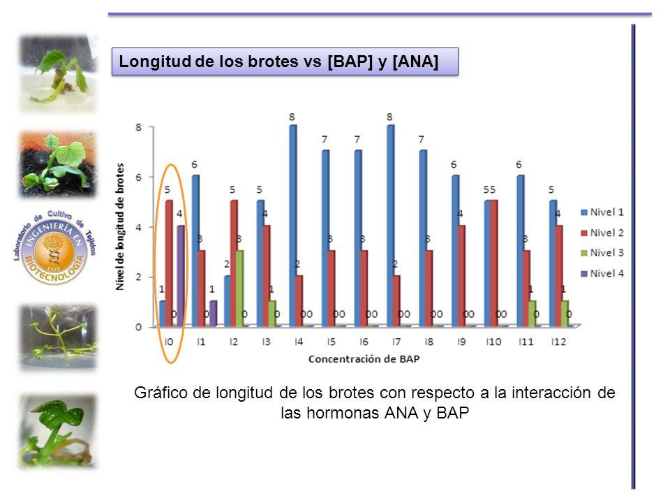 Longitud de los brotes vs [BAP] y [ANA] Gráfico de longitud de los brotes con respecto a la interacción de las hormonas ANA y BAP