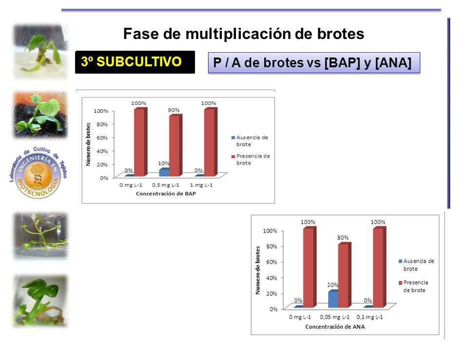1º SUBCULTIVO Fase de multiplicación de brotes P / A de brotes vs [BAP] y [ANA] 2º SUBCULTIVO 3º SUBCULTIVO