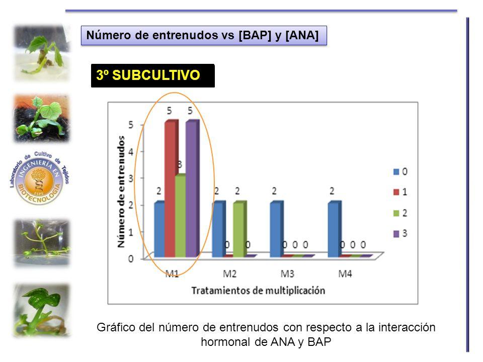Número de entrenudos vs [BAP] y [ANA] Gráfico del número de entrenudos con respecto a la interacción hormonal de ANA y BAP 1º SUBCULTIVO2º SUBCULTIVO