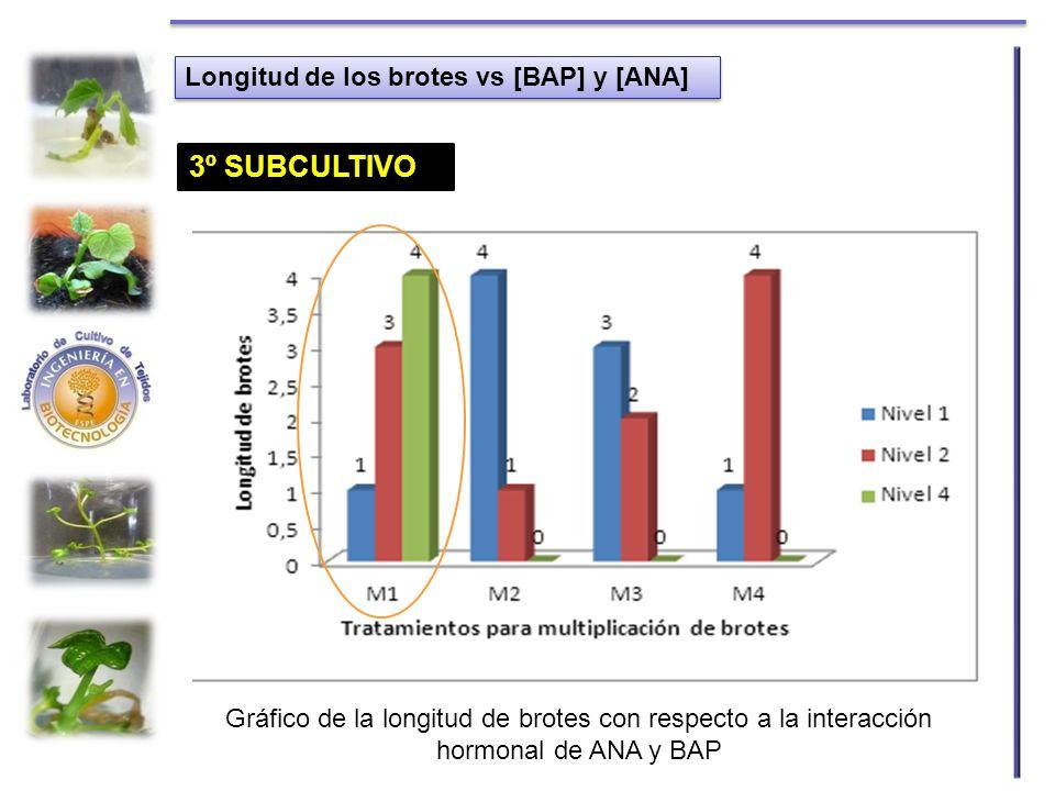 Longitud de los brotes vs [BAP] y [ANA] Gráfico de la longitud de brotes con respecto a la interacción hormonal de ANA y BAP 1º SUBCULTIVO2º SUBCULTIV