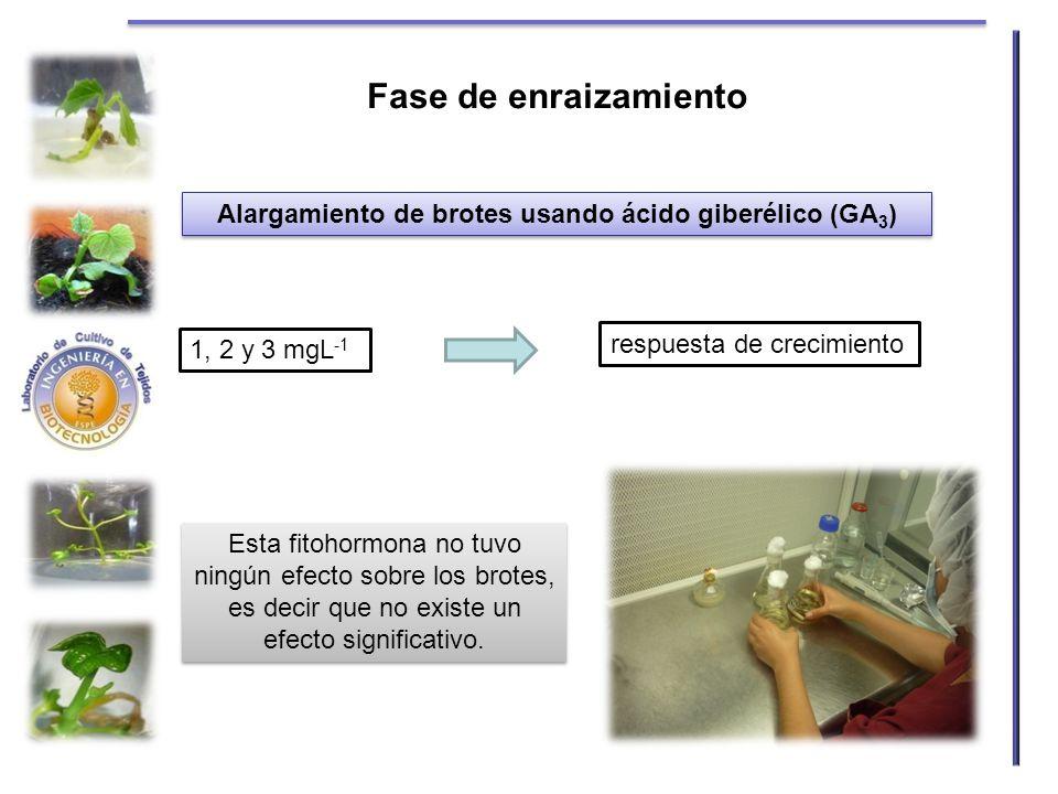 Alargamiento de brotes usando ácido giberélico (GA 3 ) 1, 2 y 3 mgL -1 respuesta de crecimiento Esta fitohormona no tuvo ningún efecto sobre los brote