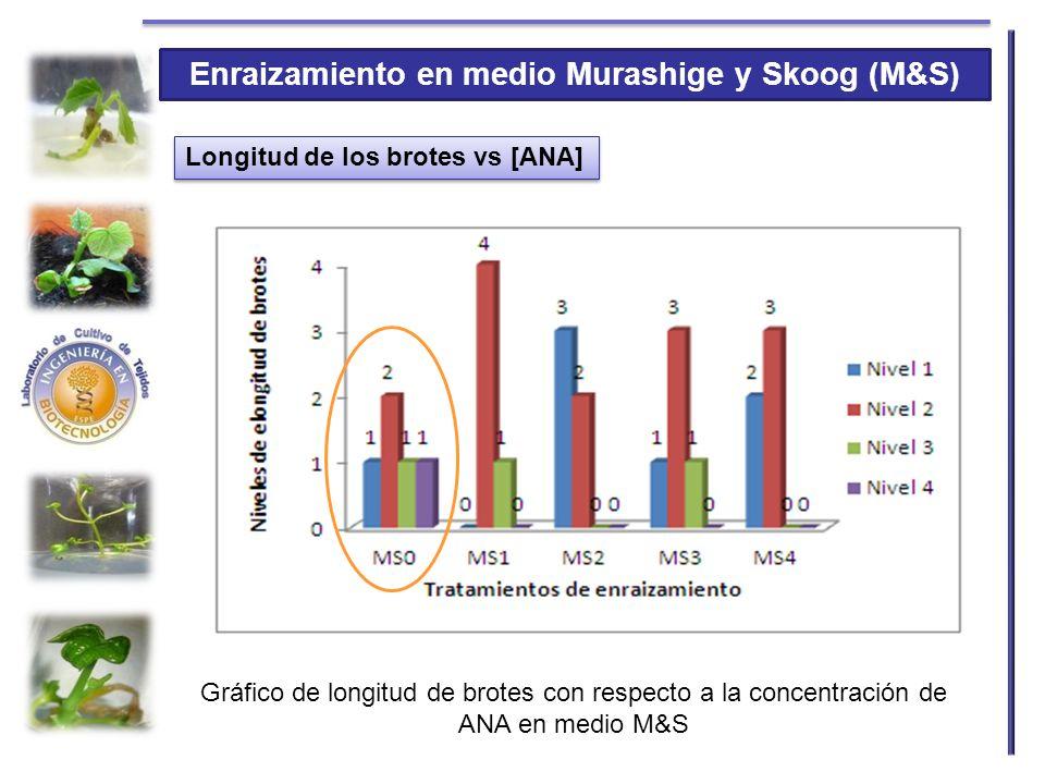 Enraizamiento en medio Murashige y Skoog (M&S) Longitud de los brotes vs [ANA] Gráfico de longitud de brotes con respecto a la concentración de ANA en